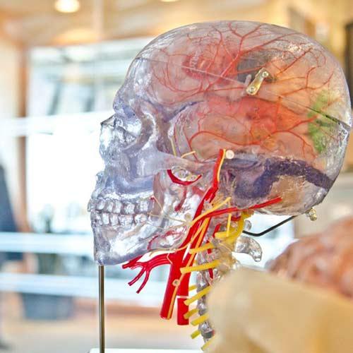 Brain Food - UMMC Translational Research Center